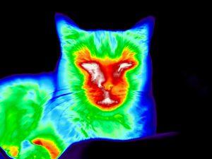 Warmtebeelden tonen ontstekingen bij huisdieren.