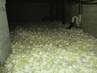bodemisolatie-groningen-kruipruimte-isolatie